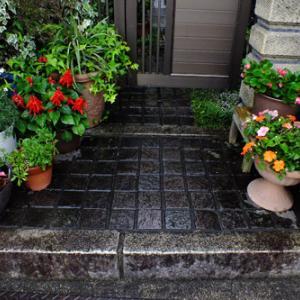 ようやく雨 わが家の花たちの置き場所