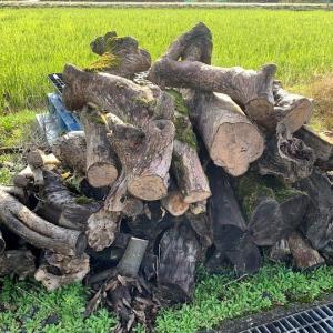 植木屋さんから一年半ぶりの原木引き取り要請