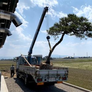 建物完成後の庭木の移植