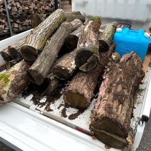 シイタケの原木になり損ねが運ばれてきた