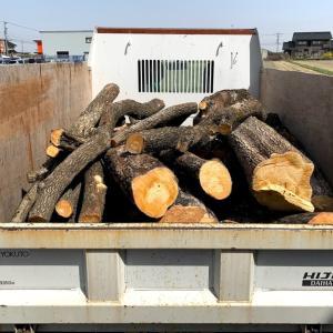 コロナに恐怖した昨春と違って今年は次々と原木が集まってくる