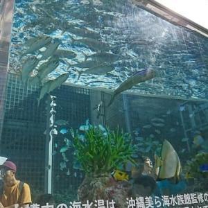 銀座で見付けた水族館