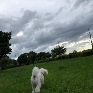 梅雨空☔️