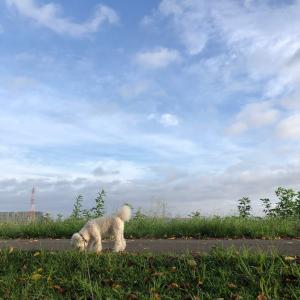 久しぶりの朝一散歩