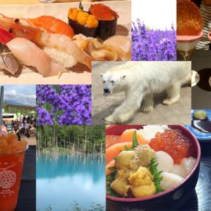 北海道7月の旅 札幌美味しいグルメと日帰りバスツアー旭山動物園と美瑛