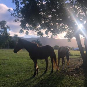 お馬さんと雄大な自然の優しさ