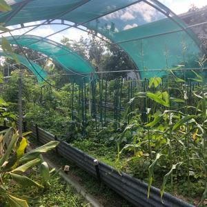 お友達の野菜畑を訪問!
