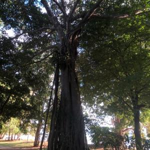 木のパワー〜対話〜
