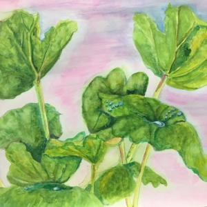 雨に滴る里芋の葉たち