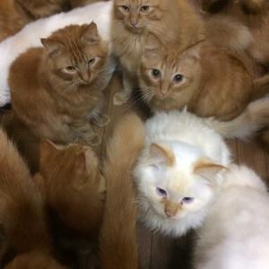 猫カフェ😺