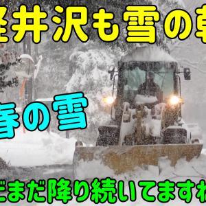 軽井沢も雪の朝。かなり積もりました。春の雪はGWぐらいまでかな