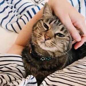 【朗報】猫がふとんに入ってくる季節到来