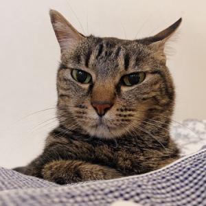 うちの猫が末期の慢性腎不全と診断されたけど実はそうじゃなかった話