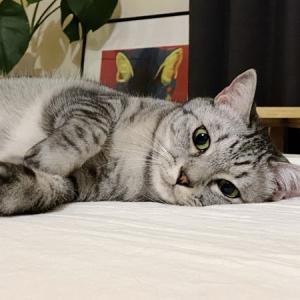 眠気をこらえながらベッドでニンゲンを待つ猫