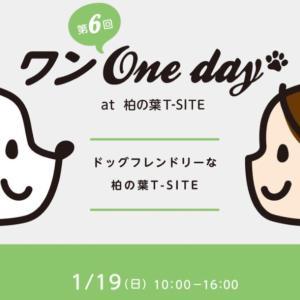 第6回ワンOne day