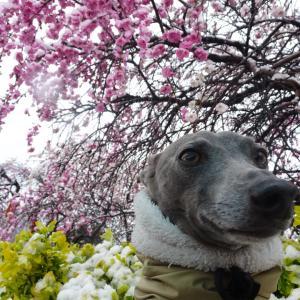 花見と雪見(自宅近辺!)