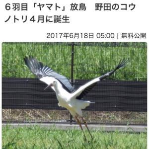 コウノトリ「ひかる」にヒナ誕生!!