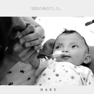 haruの命日
