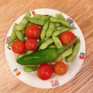 ゆうせいファームで採れた無農薬野菜