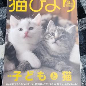 本日、猫びよりに掲載☆
