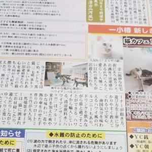 読売新聞・折り込み広告掲載