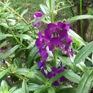 青い花々*コツコツ庭作り