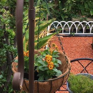 ハンギングを吊るしたらお庭の風景が変わりました
