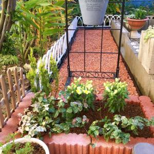ウエルカム花壇と初めてお迎えした可愛いお花達