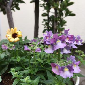 小さな庭と、地下茎でドンドン増える植物