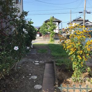 庭の余白と隣のムクゲ*