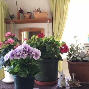 冬は室内でお花を楽しんでます♬