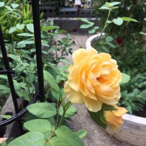 真夏の庭仕事 * サマータイムへ