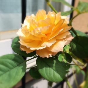 yellow flowers♡