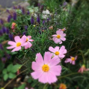 移ろう季節*初秋の庭から