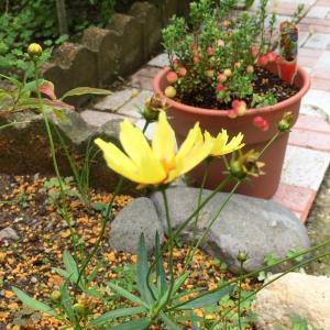 秋の訪れと共に、少しずつ華やぐ庭