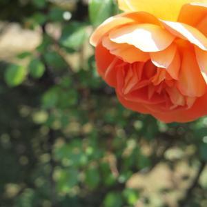 花にまつわる記憶