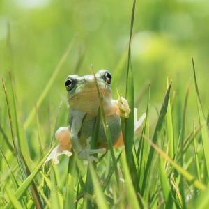 かえる・・カエル・・蛙