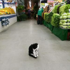 リオの猫に会えるスポット