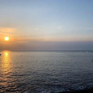 初島でイルカダイブ