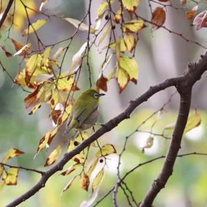 秋を見つけに