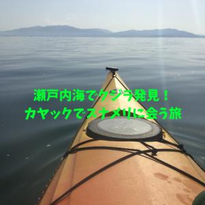 瀬戸内海にもクジラがいる!スナメリに出会うカヤック写真付き!