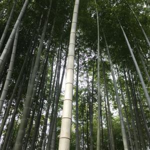 お休みで京都へ