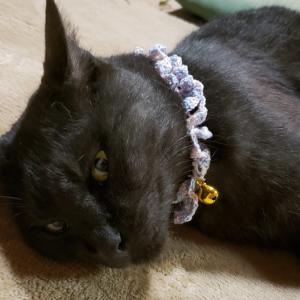 編み編みの首輪、鈴付きです。