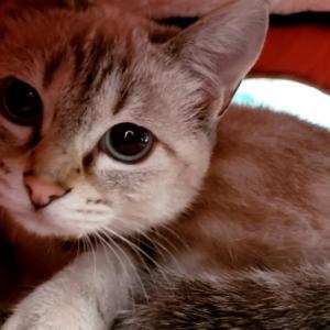 猫ハウス入居www