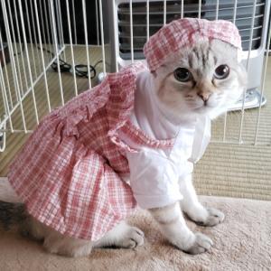 着せ替え猫になっていますฅ^•ω•^ฅ