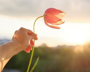 赤い花はいつから赤い花を咲かせることが決まっていた?