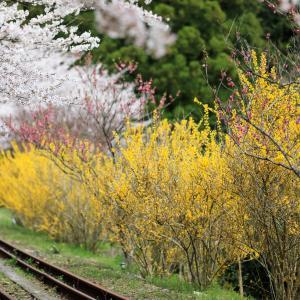 安野花の駅公園 -2020.3.30-