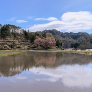 張戸お大師桜 -2021.4.12-