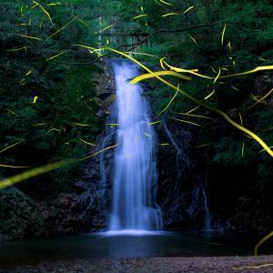 滝ホタル -2021.6.27-
