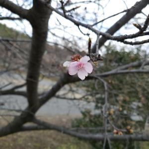 2月4日(火) 立春